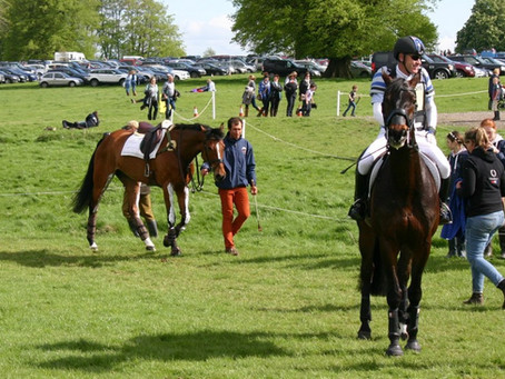 4 Key Behavioural Attributes of the International Sports Horse #RoadtoRio