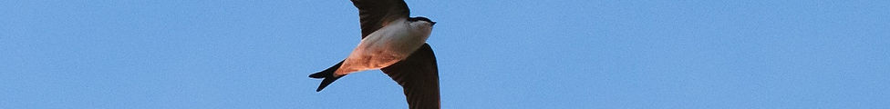 House Martin Media Web Design South Wales