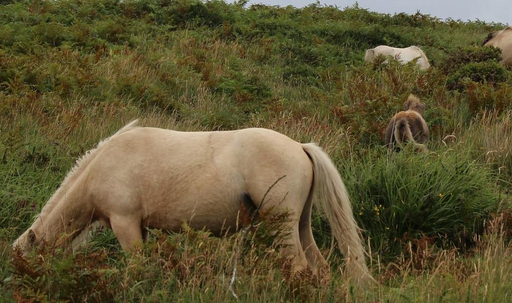 Jenni Nellist Animal Behaviourist Horses Translated Weaning