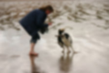 Dog walking Jenni Nellist Animal Behavior dog behaviour south wales, dog behaviour gower, dog behaviour swansea