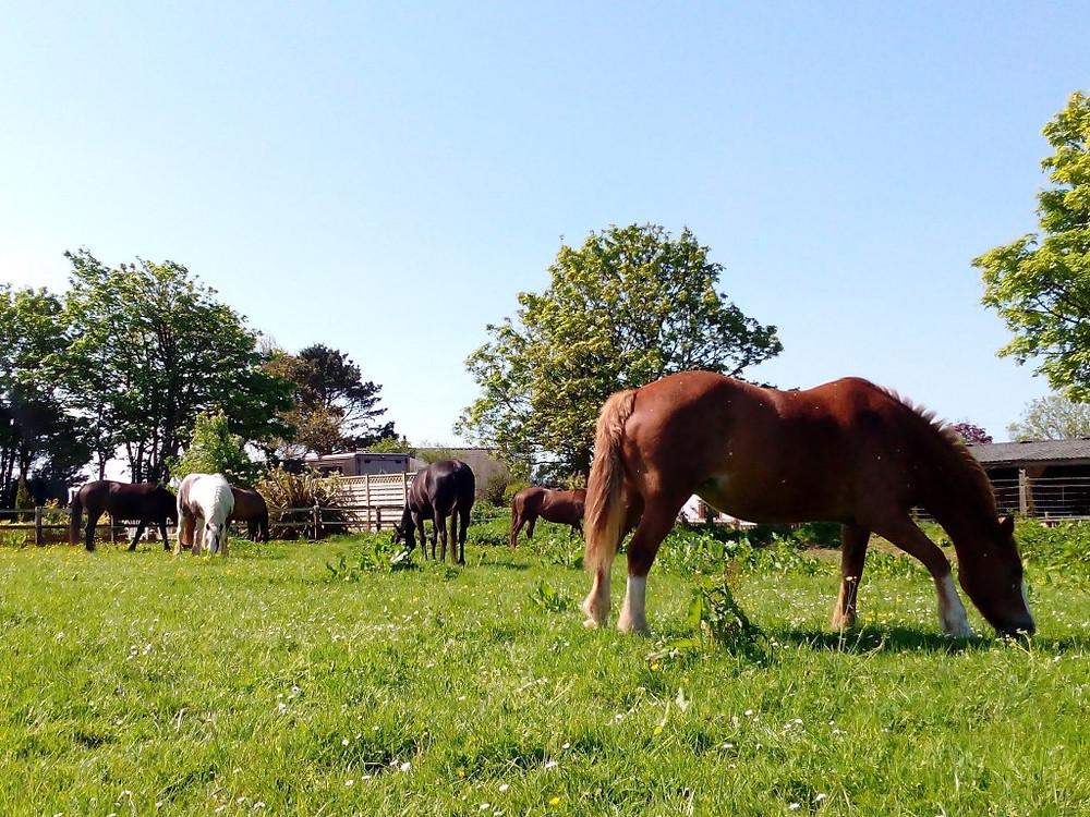 Moving Yards Jenni Nellist Animal Behaviourist Horses Translated Blog