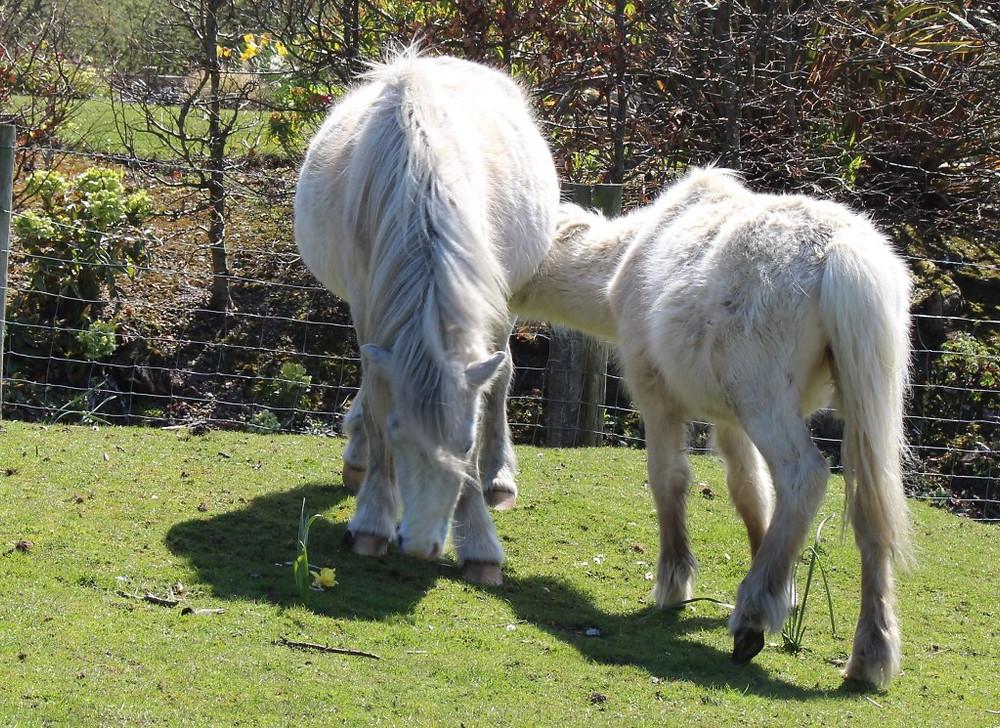 Jenni Nellist Animal Behaviourist Horses Translated