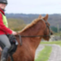 Jenni Nellist Animal Behaviourist, Equine / Horse and Dog Behaviourist South Wales Happy Hacking