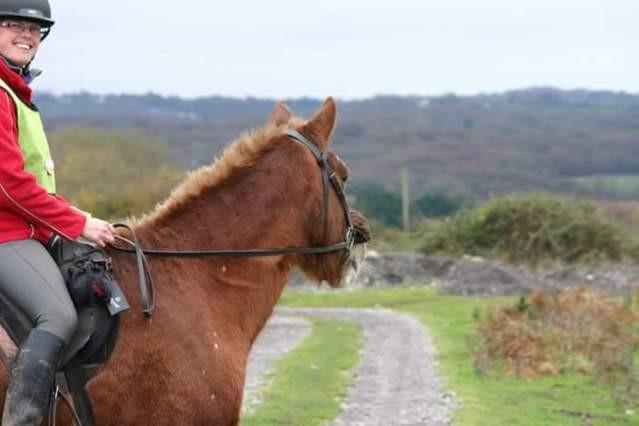 Jenni Nellist Animal Behaviourist Horses Translated Blog Happy Hacking