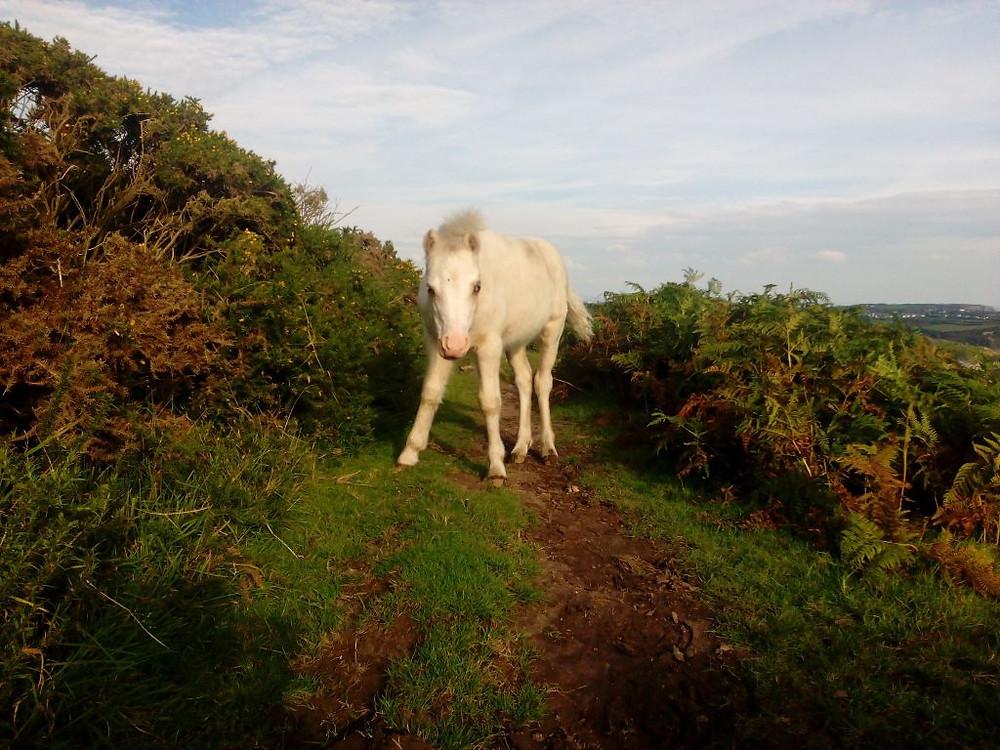 Weaning Jenni Nellist Animal Behaviourist Horses Translated