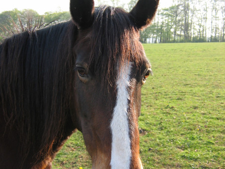 Human Behaviour Change for Animal Welfare; Guest Blog on HBC Animal Welfare