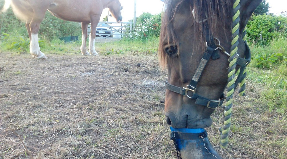 Jenni Nellist Animal Behaviourist Horses Translated Blog Horse Whiskers