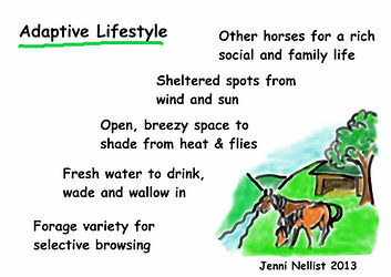 Jenni Nellist Animal Behaviourist, Equine / Horse and Dog Behaviourist South Wales Adaptive Lifestyle