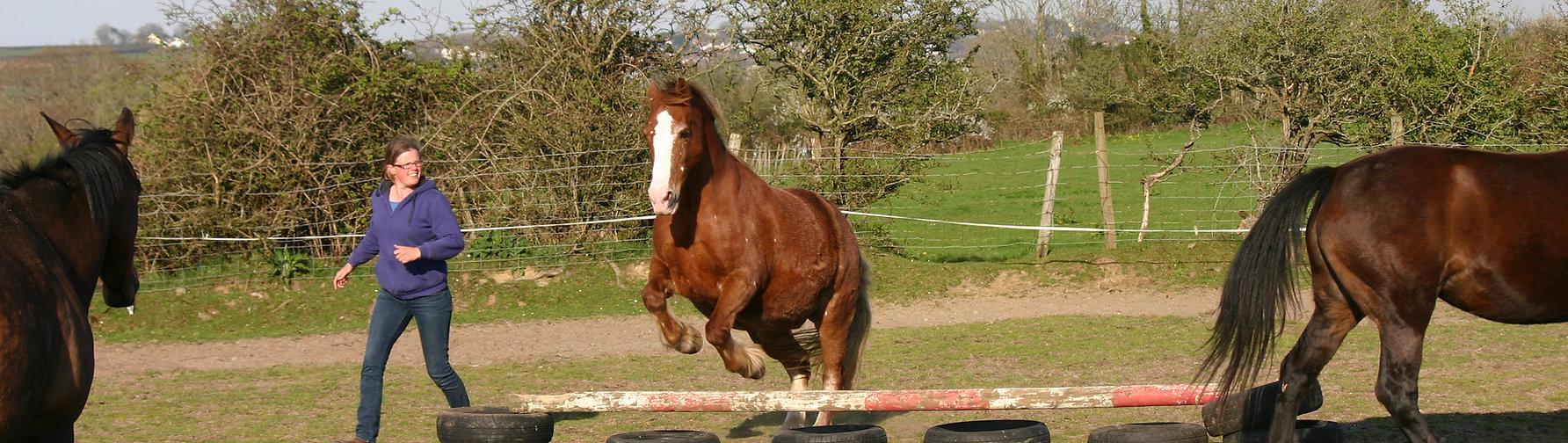 Jenni Nellist Animal Behaviourist, Equine / Horse and Dog Behaviourist South Wales Information for Vets