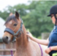Jenni Nellist Animal Behaviourist Horse