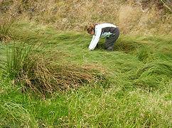 Barn owl survey Yorkshire, Water vole survey Yorkshire, Badger survey Yorkshire, Reptile survey Yorkshire