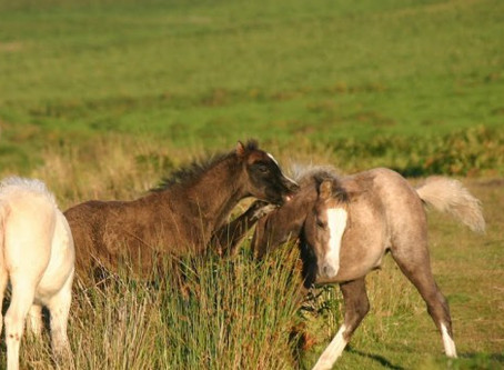 Case of the Week: Foal- Dangerous Attention Seeking