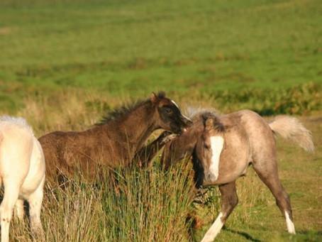 Case of the Week: Foal- Dangerous Attention Seeking