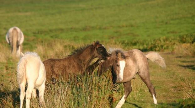 Foal Attention Seeking Jenni Nellist Animal Behaviourist Horses Translated Blog