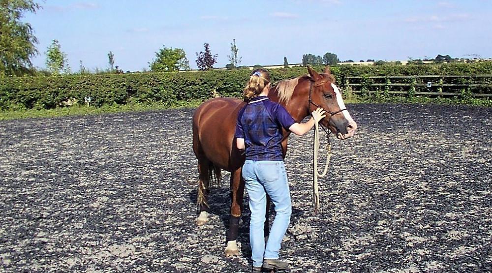 Jenni Nellist Animal Behaviourist Horses Translated Blog Clicker Training with Penny