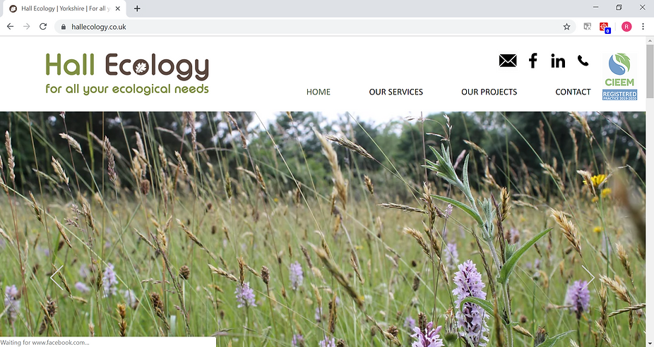 Hall Ecology Website designed and built