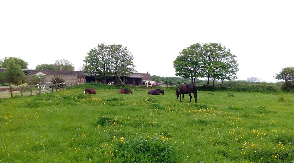 Jenni Nellist Animal Behaviourist Horses Translated Blog Moving Yards Herd