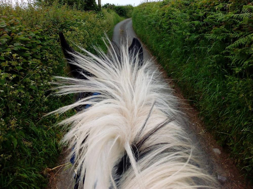 Natural Horsemanship Hater Jenni Nellist Animal Behaviourist Horses Translated Blog July 2016 2