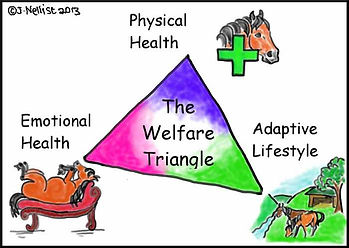 Jenni Nellist Animal Behaviourist, Equine / Horse and Dog Behaviourist South Wales The Welfare Triangle