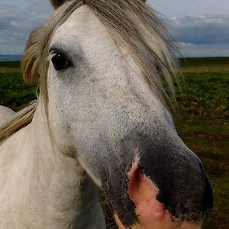Natural Horsemanship Hater Jenni Nellist
