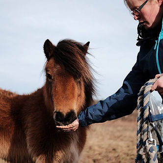 Jenni Nellist Animal Behaviourist, Equine / Horse and Dog Behaviourist South Wales Learn to Earn