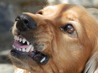 Dog aggression jenni nellist animal behaviour dog behaviour south wales, dog behaviour gower, dog behaviour swansea