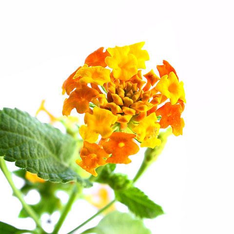 Dije Corazón Mediano Con Arreglo De Flores Tami Joyería Floral
