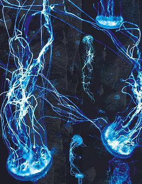 Jellyfish_2.jpeg