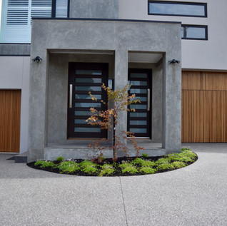 Japanese Maple feature tree in front entrance garden bed