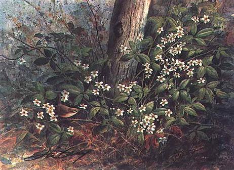 Blackberry Spring