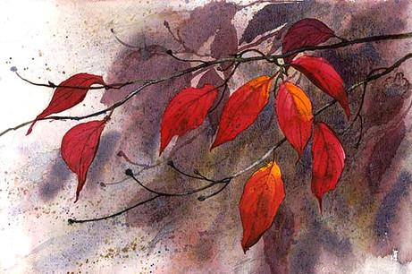 Autumn Dogwood