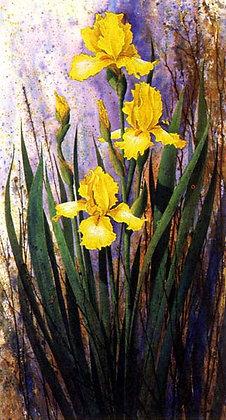 Frannies Iris