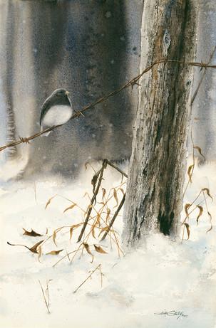 Junco in the Snow