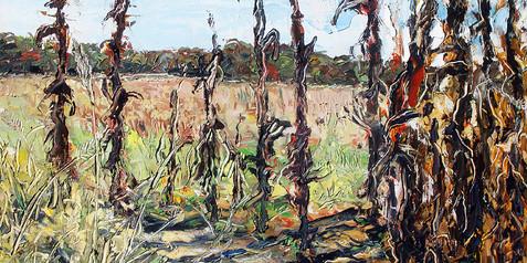 Melton's Corn Field