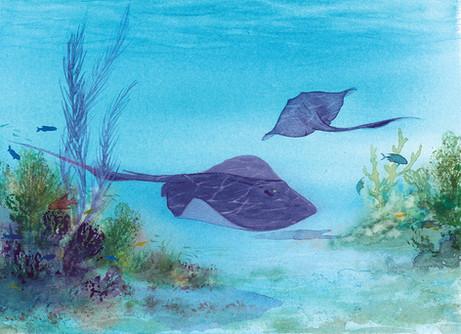 Cayman Rays