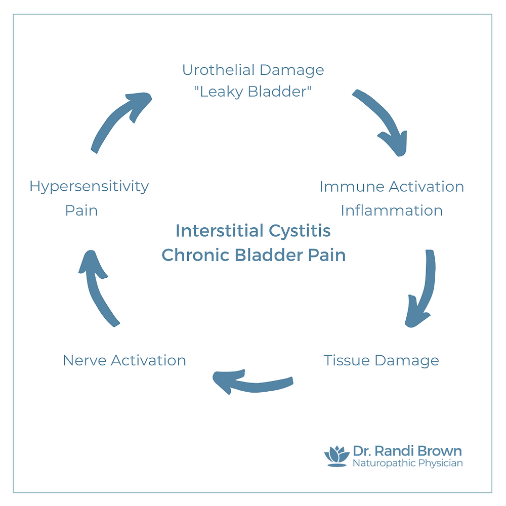 Interstitial Cystitis / Chronic Bladder Pain Syndrome Cycle