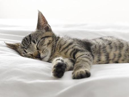 La sieste, cette alliée santé insoupçonnée