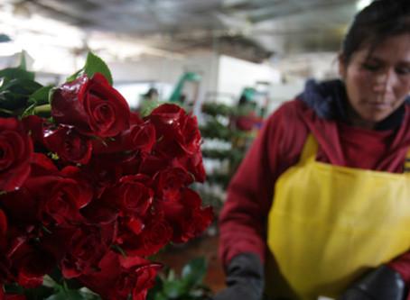 Saint-Valentin : les dessous peu chics de la reine des fleurs