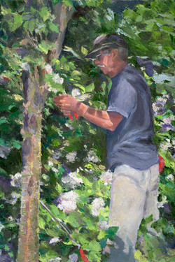 Pruning Vibernums
