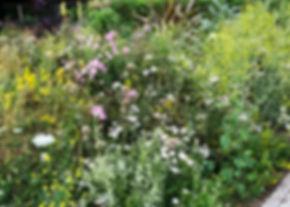garden wild.jpg