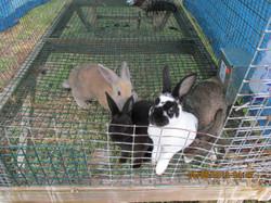 animals (7).JPG