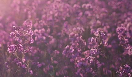 fleurs30.png