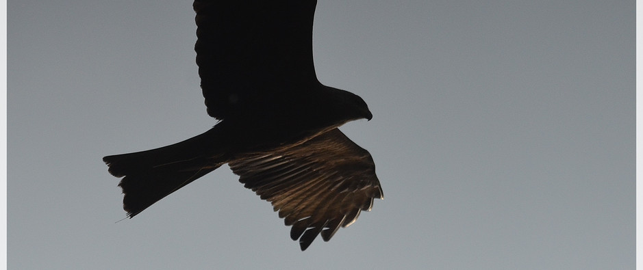 milan noir12_7.jpg