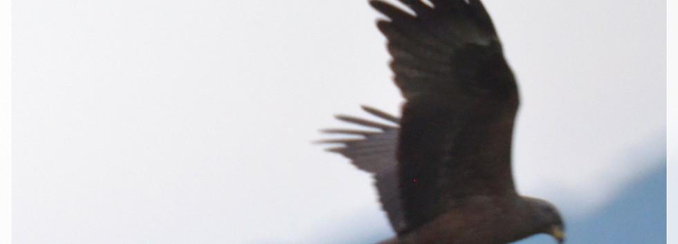 milan noir12_2.jpg