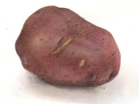 10 Small Red Potatoes