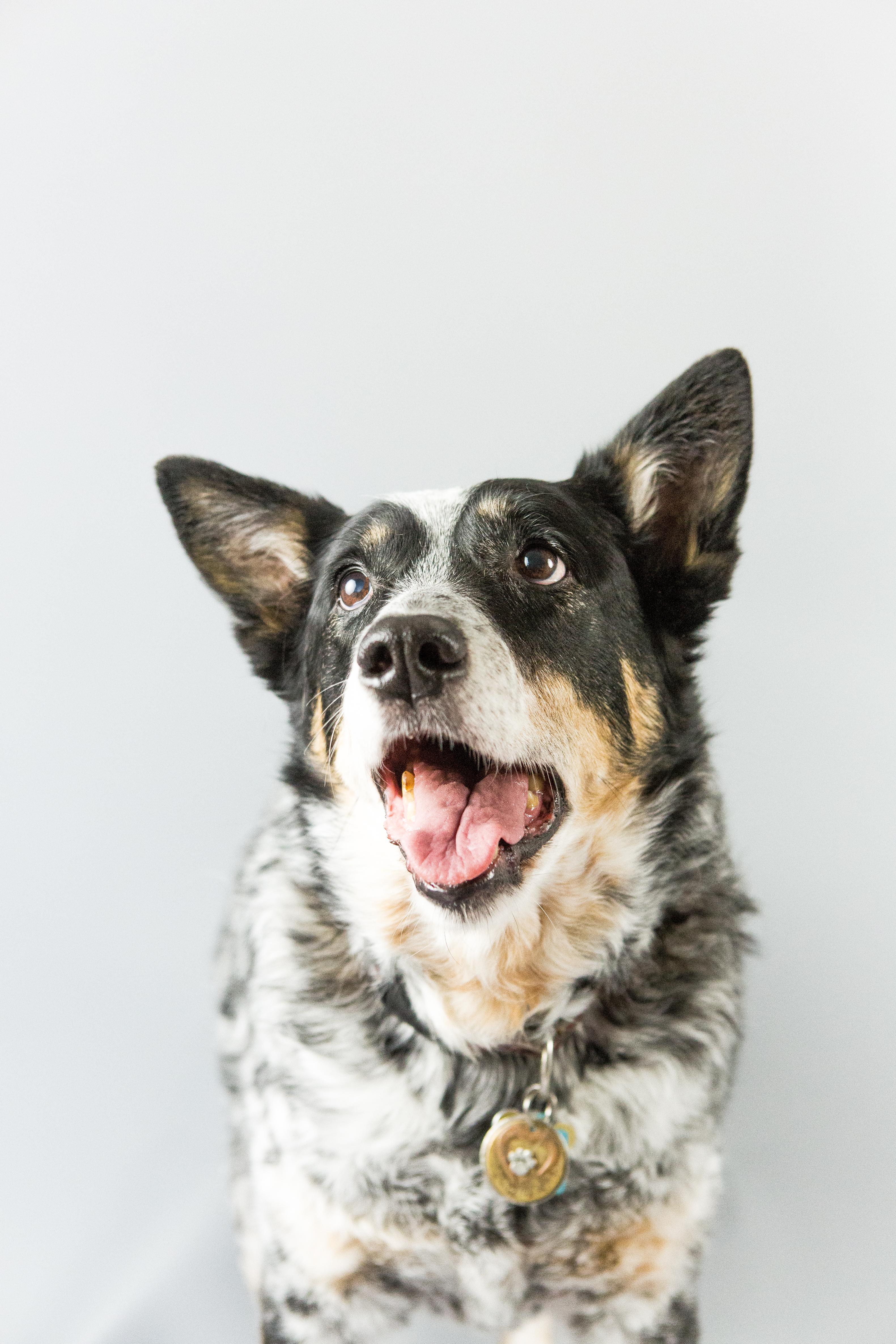 Dog Day - Kali_-18
