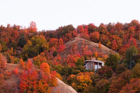 Fall Pictures_Megan.Nielsen-9.jpg