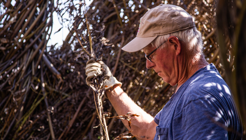 Patrick Dougherty Builds a Sculpture on Utah State University's Campus