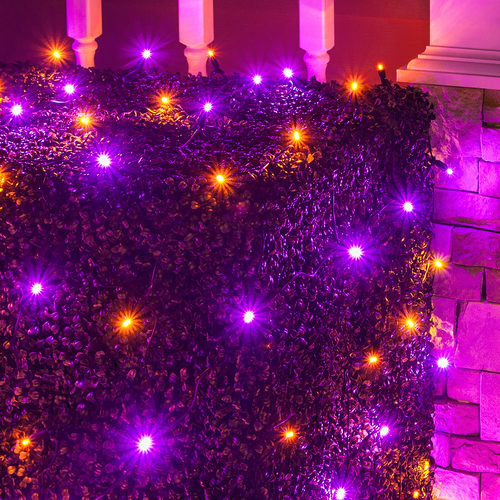 4' x 6' Purple, Orange 5mm LED Christmas Net Lights, 100 Lights on Black Wire     4' x 6' Purple, Orange 5mm LED Christ