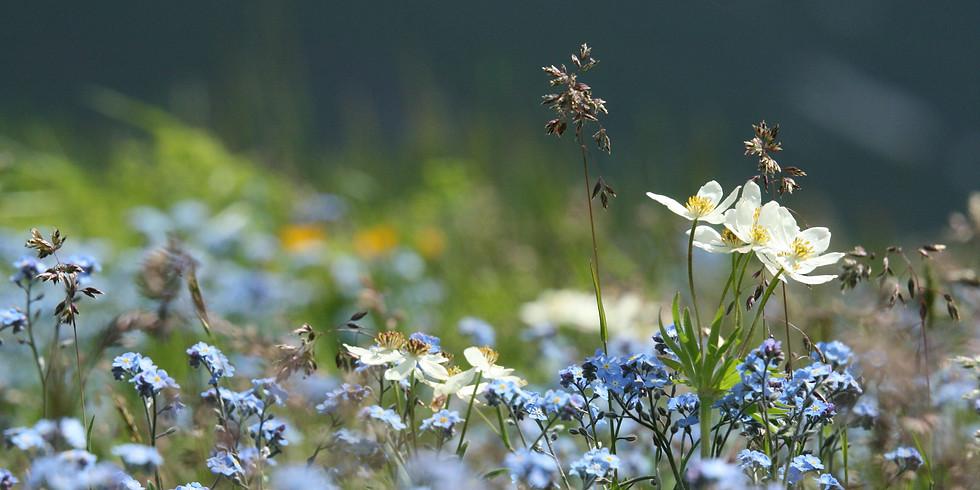 Séjour botanique aux Grisons (complet)